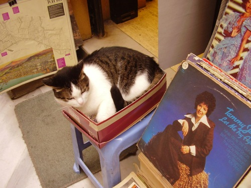 Cat of Istanbul enjoying a box of records outside Lale Plak music shop