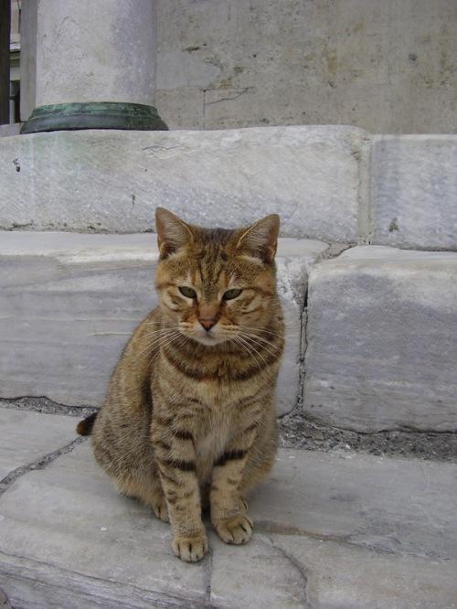 Istanbul Cat 1