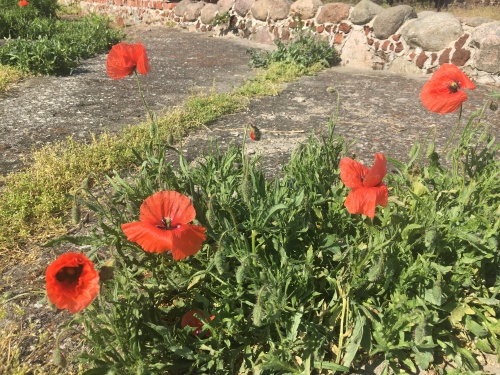 Poppies at the Castle of Blood Evil